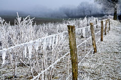Winter Landscape Icy Barbed Wire Stock Photography