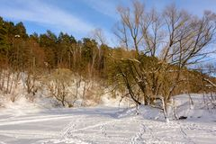 Winter landscape. Island on a frozen river. Trees in the snow. Ski track in the snow. royalty free stock image