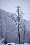 Winter landscape with isolated tree Stock Images