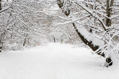 Winter landscape in Izmaylovsky park in the daytime. Moscow Stock Images