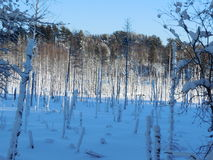 Winter landscape in the Karelia. Stock Photography