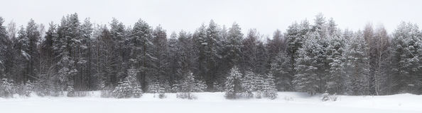 Winter landscape in the Karelian wood Royalty Free Stock Photography