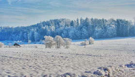 Winter landscape. Knitted Appeltes wood is doused with water in winter Royalty Free Stock Photos