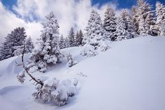 Winter landscape at Kopaonik mountain Stock Image