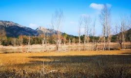 Winter landscape with lake. Muga Royalty Free Stock Images