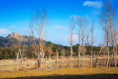 Winter landscape with lake. Muga,  Catalonia Stock Image