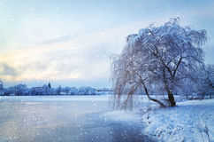 Winter landscape with lake and tree in the frost with falling sn Stock Image