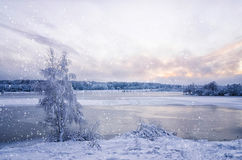 Winter landscape with lake and tree in the frost with falling sn Royalty Free Stock Photography