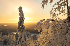Winter landscape in Lapland Finland Stock Image