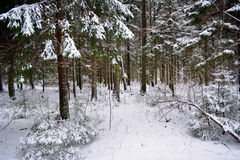 Winter landscape in Latvia Stock Photo