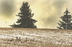 Winter landscape, Lithuania Stock Images
