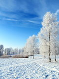 Winter landscape, Lithuania. Stock Images