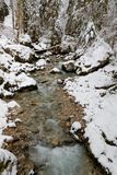 A little canyon in Chartreuse range. Winter landscape of a little canyon in the French Alps range of Chartreuse Stock Images