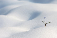 Winter Landscape. Winter Landscape with a little wild flower Royalty Free Stock Photo