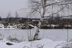 Winter landscape of lonely birch on a background of city buildings factory chimneys. Outskirts of town lake Stock Images