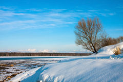 Winter landscape with lonely tree Royalty Free Stock Image