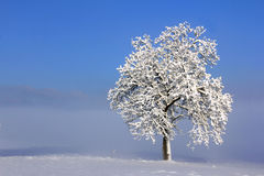 Winter landscape with lonely tree Royalty Free Stock Photos