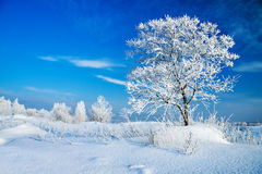 Winter landscape with a lonely tree Stock Photo