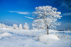 Winter landscape with a lonely tree Stock Photos