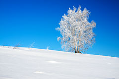 Winter landscape with a lonely tree and the blue sky Stock Photography