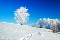 Winter landscape with a lonely tree and the blue sky Royalty Free Stock Photos