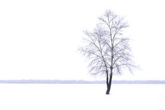 Winter landscape with lonely tree in mist Royalty Free Stock Photo