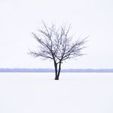 Winter landscape with lonely tree in mist Royalty Free Stock Photos