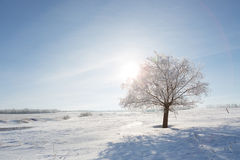 Winter landscape with lonely tree and snow field Stock Photo