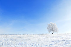 Winter landscape with lonely tree and snow field Royalty Free Stock Photography