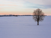 Winter landscape with lonely tree and snow field. Royalty Free Stock Photography