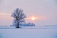Winter landscape. Lonely tree in a snowy field at sunrise - image royalty free stock photo