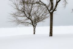 Winter landscape with lonely trees Royalty Free Stock Images