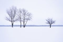 Winter landscape with lonely trees in mist Stock Photography