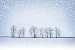 Winter Landscape with Lonely Trees and Snow Stock Images
