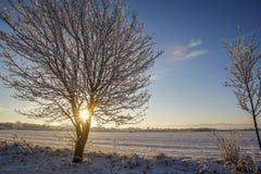 Winter landscape low sunshine. Frozen tree in low winter sunshine seasonal snow scene Stock Photography