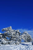 Winter landscape M. Spruce trees covered by snow in beautiful winter landscape Stock Photos