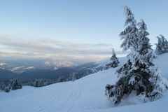 Winter landscape firs and bushes in the snow. Winter landscape majestic firs covered with snow, picturesque nature, freeride track Stock Photography