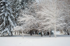 Winter landscape. Majestic snowy park. Europa Stock Photo