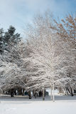 Winter landscape. Majestic snowy park. Europa Royalty Free Stock Images
