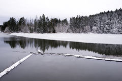Winter landscape mirroring Lacamas Lake and coniferous forest co Royalty Free Stock Images