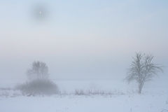 Winter landscape with the moon. And trees Royalty Free Stock Photo