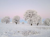 Winter landscape with moon Royalty Free Stock Photo