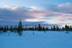 Winter landscape in the morning of a december day. In Hedmark county Norway royalty free stock photography
