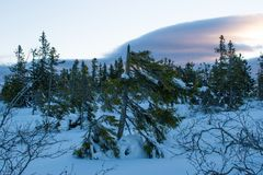 Winter landscape in the morning of a december day. In Hedmark county Norway royalty free stock photo