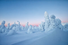 Winter landscape in morning light Royalty Free Stock Photography