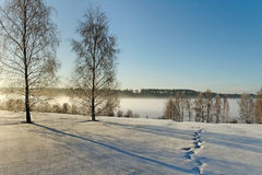 Winter landscape. Stock Image