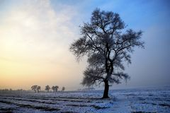 Snow-covered field,Winter landscape in morninge stock images
