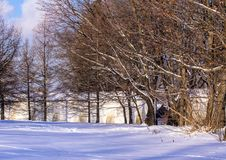 Winter landscape. Moscow park in winter. Stock Image