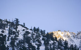 Winter Landscape in Mount Baldy Royalty Free Stock Photography