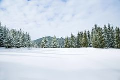 Winter landscape, mountain fir tree forest in winter Stock Images